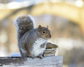 squirrely_1